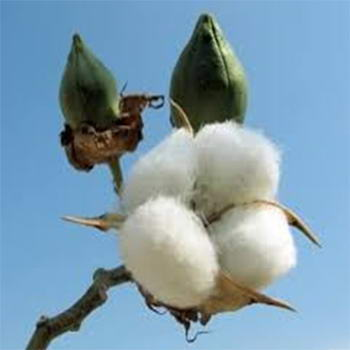 Cotton and fibre industries